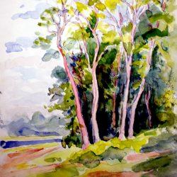 Bois, forêt de Fontainebleau