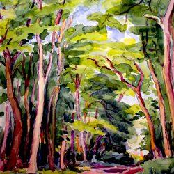 Allée en sous-bois, Fontainebleau
